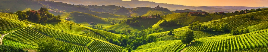 Wein aus Piemont