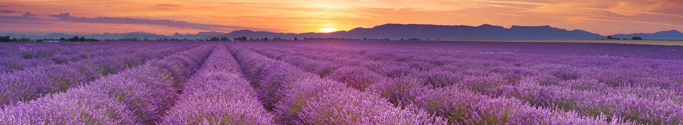 Wein aus Provence
