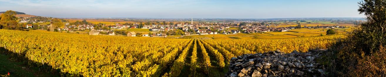 Bourgondische wijnen