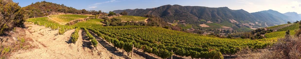 Wein aus Sardinient