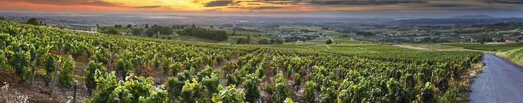 Wein aus Rhône