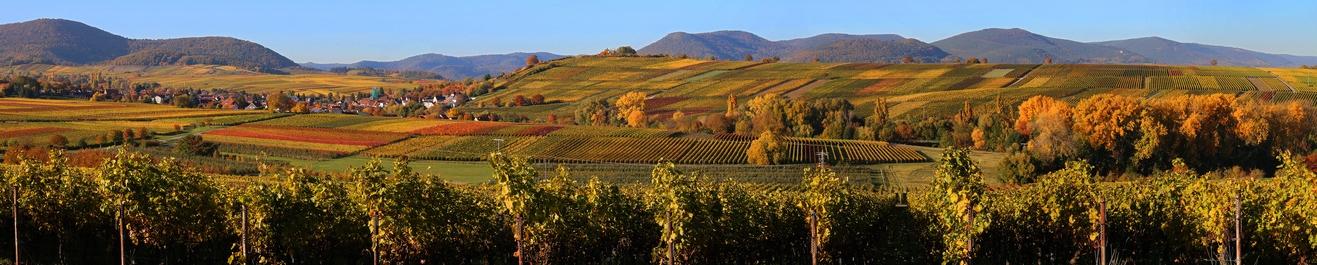Wein aus Pfalz